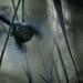 Vingar / Wings - (Explore)