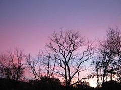 violet breeze (stansvisions) Tags: sky catchycolors virginia pretty violet va catchycolorsviolet stansvisions violetbreeze