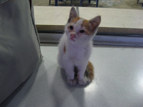 Kitten At The Airport