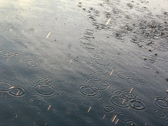 Raindrops (*PaysImaginaire*) Tags: light sun lake nature water rain dark shower droplets drops perfect action many ring rings raindrops splash showers raining caught pouring hardrain waterrings