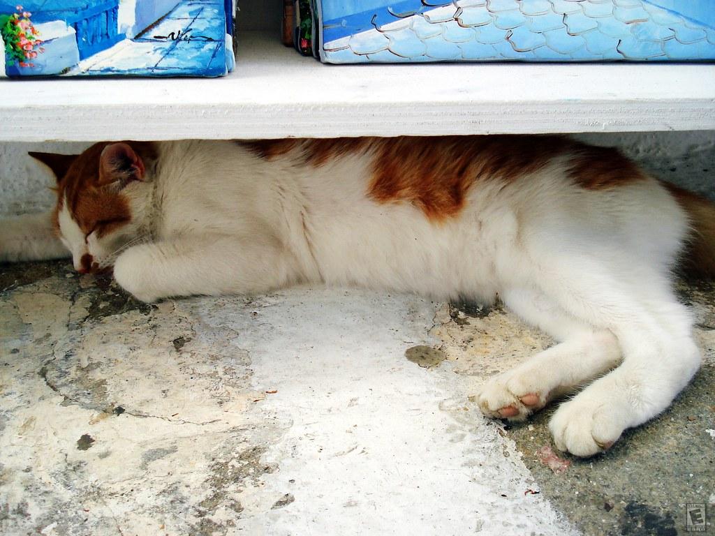 cat underneath