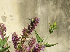 P1010202 (Zhuliya_B) Tags: flower fiori piante ortobotanico