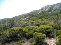 Maquis au-dessus des plaines de Salina et Aratesi