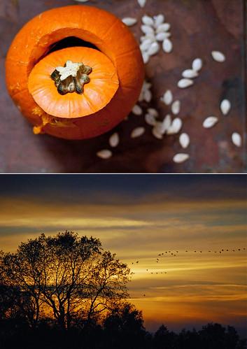 autumndip2