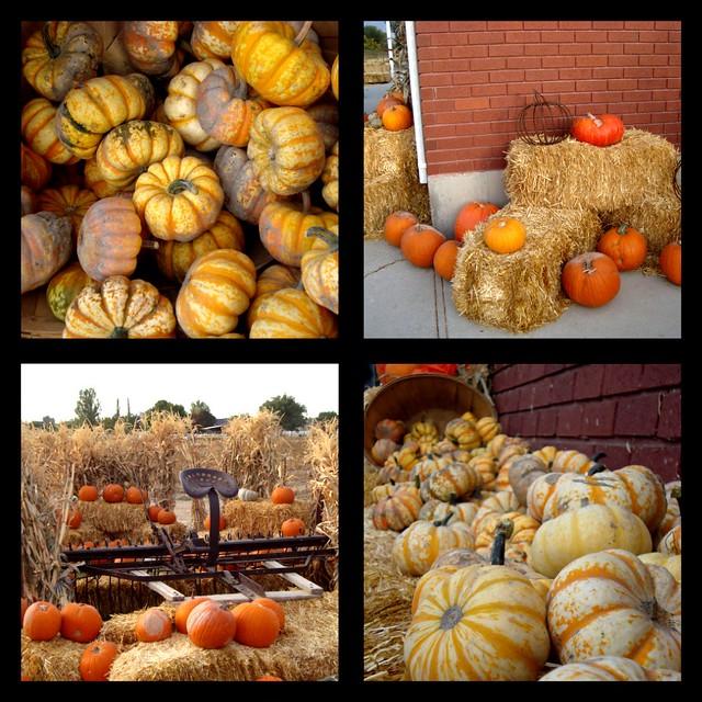 PumpkinPatchsetup