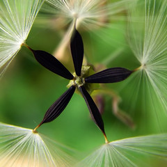 Black Star - by ecstaticist