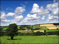 Devon countryside (ExeDave) Tags: uk england southwest countryside nationalpark place farm farmland explore devon pasture plantation footpath dartmoor esa okehampton cycleway interestingness500 graniteway mywinners superaplus aplusphoto estrayerpark westokement westokementvalley placeplantations