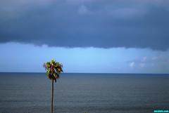 StormApproaching (mcshots) Tags: ocean california sea summer usa water palms coast losangeles cloudy images september socal rainy palmtree mcshots swells pdr playadelrey