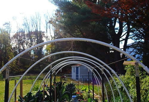 Building hoop house 6