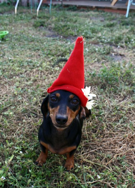 Chloe gnome