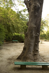 The trunk remains (-Filippos-) Tags: tree gardens bare cyprus trunk municipal nicosia lefkosia municipalgardens