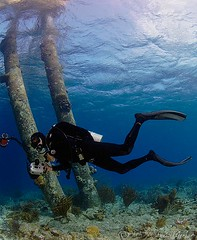 shey7305pcw (gerb) Tags: blue water topv111 510fav topv555 topv333 underwater topv1111 topv999 scuba topv5555 blogged topv777 diver d200 topv9999 topv3333 bonaire tvp topv7777 105mmf28gfisheye saltpier pfo photofaceoffwinner pfogold