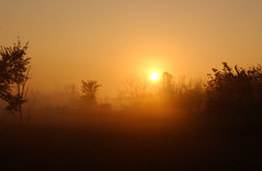 sunrise over fog (Adam FLiK) Tags: trees sun field fog sunrise rise naturesfinest wonderworld 10faves worldbest flikproductionscom flikproductions adamflikkema