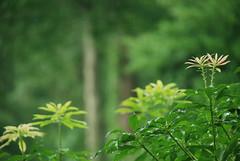 (noahg.) Tags: flowers slr rain digital nikon zoom bokeh kitlens af nikkor dslr bushes zoomlens autofocus nikkorlens d80 noahbulgaria nikond80 nikkorkitlens afsnikkor18135mm13556ged