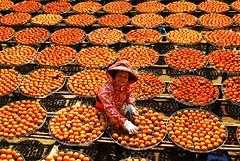 柿餅婆 -- Dried Persimmon Lady #2