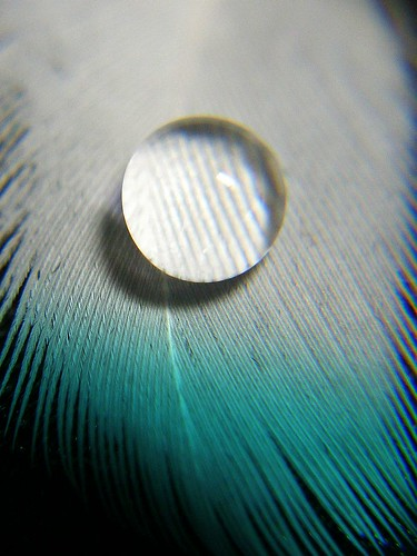Waterdrop on a feather