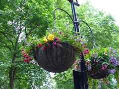 How to grow Container Gardens and Hanging Baskets