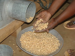 Emptying metal silo used for maize storage, Kenya (CIMMYT) Tags: africa metal store corn technology hand kenya grain storage silo demonstration impact mano salida agriculture showing maize kenia outlet grano tecnologa demonstrating eastafrica impacto agricultura sdc frica emptying mostrando maz demostracin subsaharanafrica almacn almacenamiento foodsecurity demostrando cimmyt almacenaje seguridadalimentaria vaciando incomesecurity fricaoriental fricasubsahariana swissagencyfordevelopmentandcooperation effectivegrainstorage almacenamientoefectivodegrano postharvestlosses prdidasposcosecha seguridadeconmica