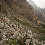 Pale di San Martino, Dolomites, Italy