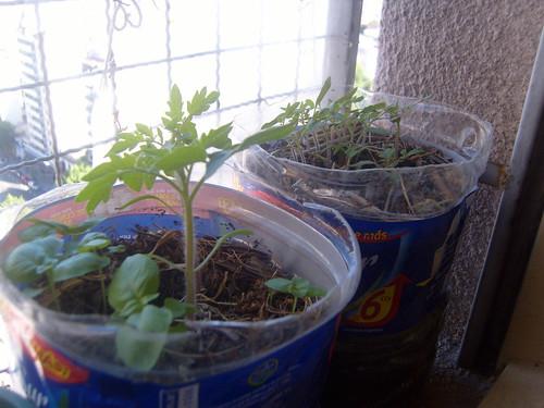 2-tomates