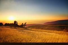 We'll walk in the fields of gold (Mr.PartyHut ) Tags: sunset sun mountain grass montagne landscape tramonto spot hills erba cielo fields sole terra paesaggio colline gmt campi radura mywinners platinumphoto colorphotoaward marcomatteucci mygearandmepremium mygearandmebronze mygearandmesilver mygearandmegold mygearandmeplatinum