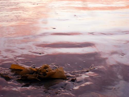 Seaweed Sand Sunset