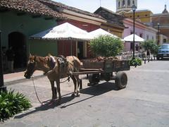 Nicaragua - Granada - Horse Cart