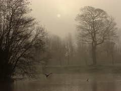 Mist, trees of the lake (Mr Grimesdale) Tags: park trees mist lake reflection fog liverpool peace sony ducks peaceful tranquil knowsley merseyside kirkby capitalofculture mistylake mrgrimsdale stevewallace capitalofculture2008 liverpoolcapitalofculture2008 dsch2 europeancapitalofculture2008 millfarm 15challengeswinner photofaceoffwinner liverpoolcapitalofculture pfogold pfohiddengem mrgrimesdale grimesdale