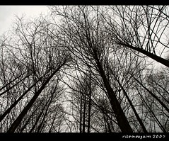 Cluttered,but straight to the sky (risemeagain) Tags: china back supershot canoniss2 mywinners shieldofexcellence impressedbeauty excellentphotographerawards risemeagain theperfectphotographer