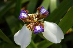 Uma flor, bromélia ou orquídea?