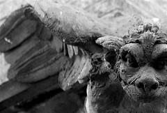 GARGOYLES, NY 164 (mysunsin) Tags: dragon gargoyle grotesque bwdreams aplusphoto unlimitedphotos