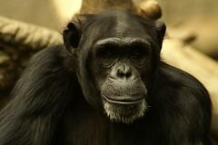 2006_09_Leiptiz_Zoo_0212