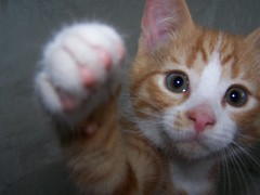 Zwaaien (kattenspul) Tags: red pet cat kitten kat waving bestofcats