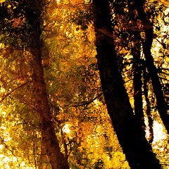 A Van Gogh spirit! (Denis Collette...!!!) Tags: sunlight canada reflection tree water beautiful yellow bravo truth spirit quality reflet qubec chapeau arbre esprit themoulinrouge adulation me firstquality vrit magicdonkey flickrsbest abigfave vision1000 shieldofexcellence aplusphoto visiongroup flickrplatinum megashot deniscollette wildriver riviresauvage vangoghspirit vangogh flatterie thebestyellow world100f vision100