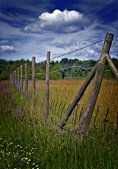 The Fence - by Colin 30d