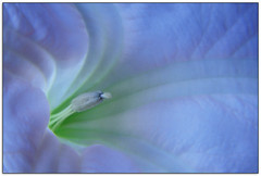 Reproductive (jasontheaker) Tags: summer flower macro photoshop garden dof feminine jasontheaker