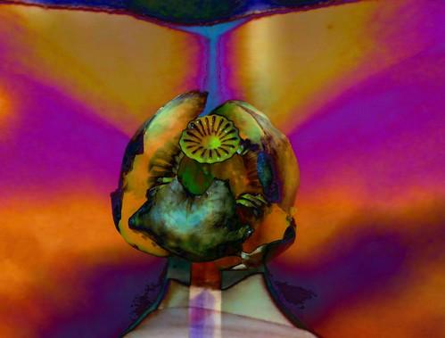 Flower Labia