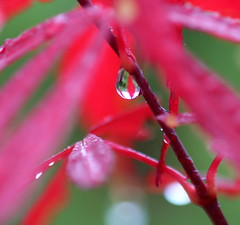Vibrant: Raindrops keep falling... (Caro's Lines) Tags: pink red green leaves photo drops raindrops naturesfinest 10faves msh1108 superhearts msh11081 onewordfebruary