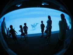 Passers-by (Amanda SG) Tags: blue kids glow tank corpuschristi fisheye dolphins texasstateaquarium