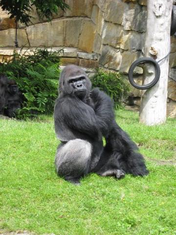 gorillaz (Small)