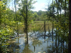 Texas wetlands (gurdonark) Tags: nature swamp watery texaswetland