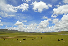 Free World #1 (Luo Shaoyang) Tags: china wallpaper sky nature landscape nikon scenery tibet microsoft geography    madeinchina    luo      nikond200        landscapephotos aplusphoto luoshaoyang colourartaward chinageography