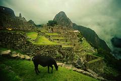 Machu Picchu (La Mosk) Tags: paisajes verde peru landscape lluvia place ruinas machupicchu alto llamas montaas