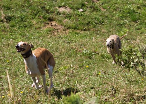 Wandertag Nisha und Coco