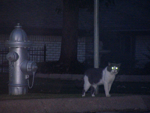 cat_and_hydrant