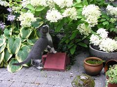wat zijn jullie mooie bloemen! (marysemies) Tags: cats cat chats katten kat chat gato gatto gatti felidae ktze felido