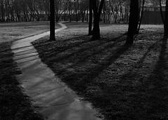 дорожка (тудаблин) Tags: 2005 дерево тень дорожка чб цифра