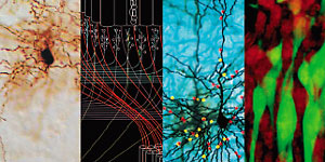 Images from research on the cortex by Goldman-Rakic and colleagues at Yale