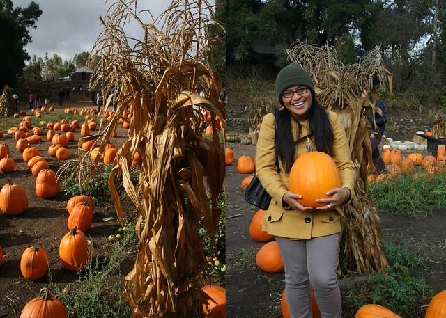 pumpkin happy