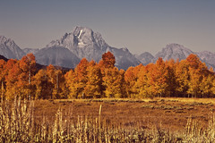 Mount Moran surveys her blazing aspens (buckchristensen) Tags: autumn trees mountain fall landscape aspens wyoming mountmoran grandtetons grandtetonnationalpark